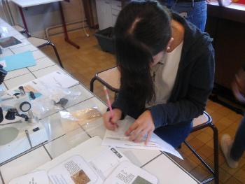 Saisie des informations sur les roches du bassin d'Autun